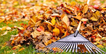 Greenhouse-to-Garden-Fall-Lawn-Care-Leave-Mulching