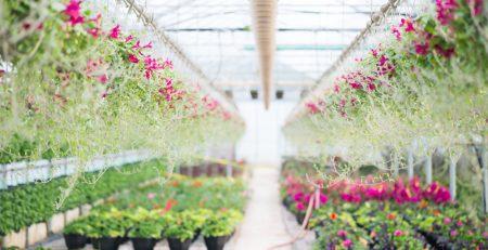 Greenhouse to Garden Vaughan Garden Centre Opening