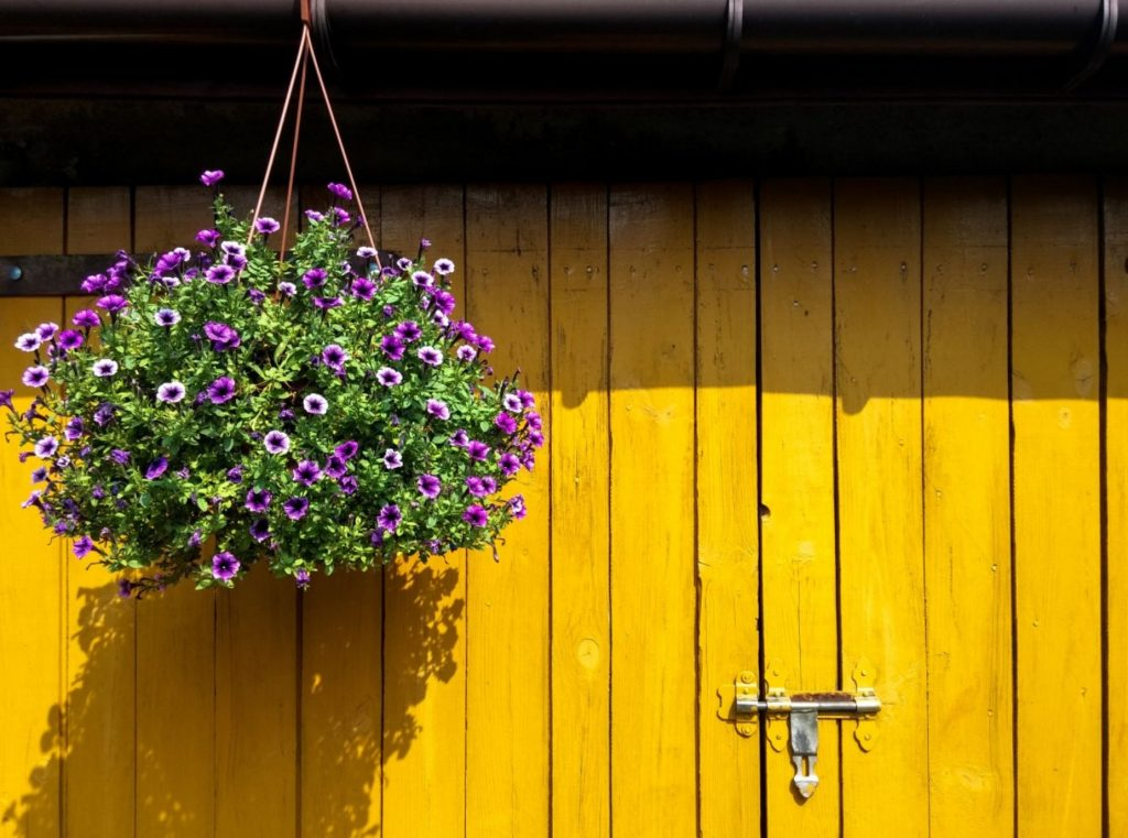 Commercial Hanging Baskets - Greenhouse to Garden